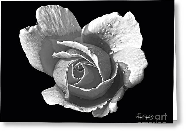 Wet Rose Greeting Cards - Wet Rose Portrait Greeting Card by Diane E Berry