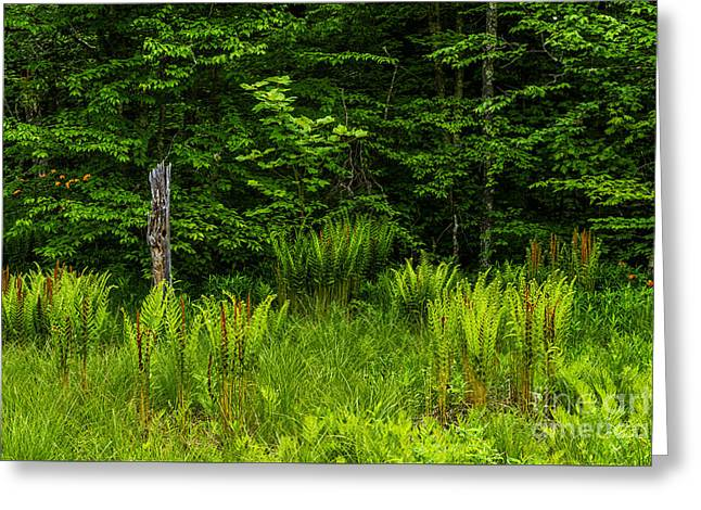 Woodland Scenes Greeting Cards - Wetland and Woodland Greeting Card by Thomas R Fletcher
