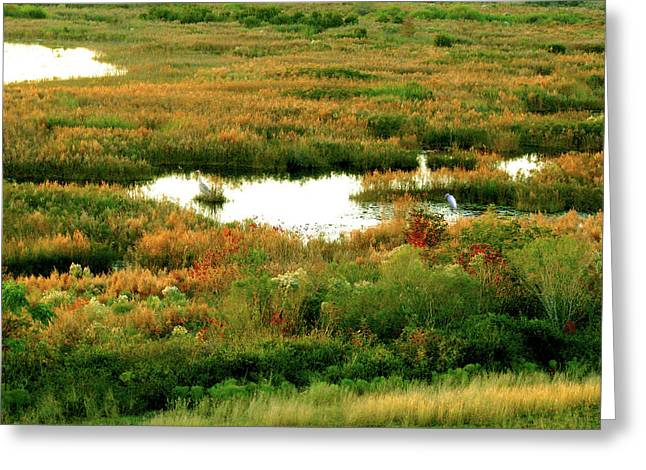 Beautiful Scenery Greeting Cards - Wetland Beauty Greeting Card by Adele Moscaritolo
