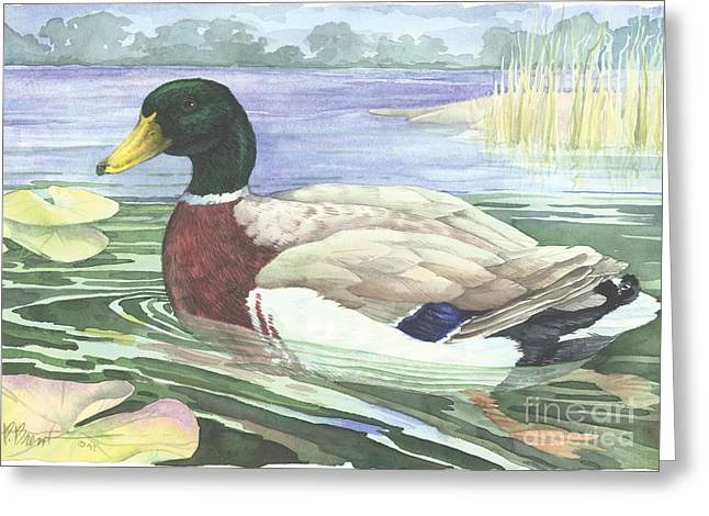 Wetland Greeting Cards - Wetland Mallard - Male Greeting Card by Paul Brent