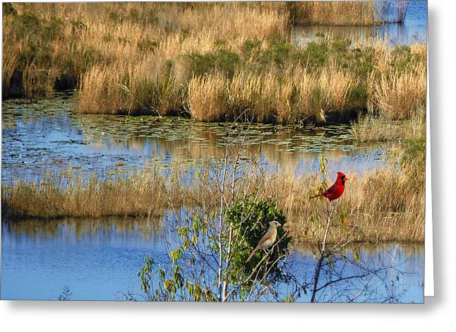 Florida Marsh Greeting Cards - Wetlands Greeting Card by Adele Moscaritolo