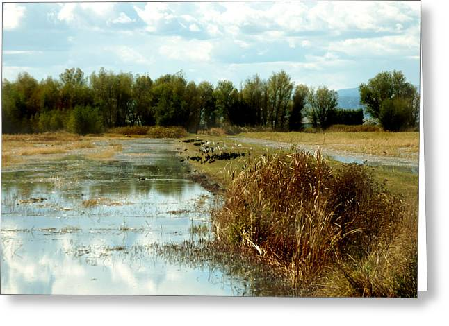 Wetlands Greeting Card by Pamela Patch