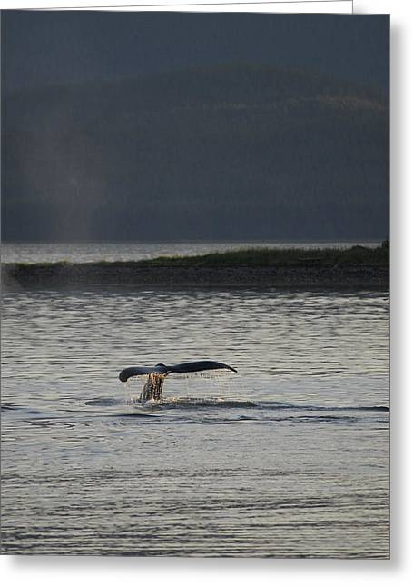 Whale In Alaskan Waters Greeting Card by Don Wolf