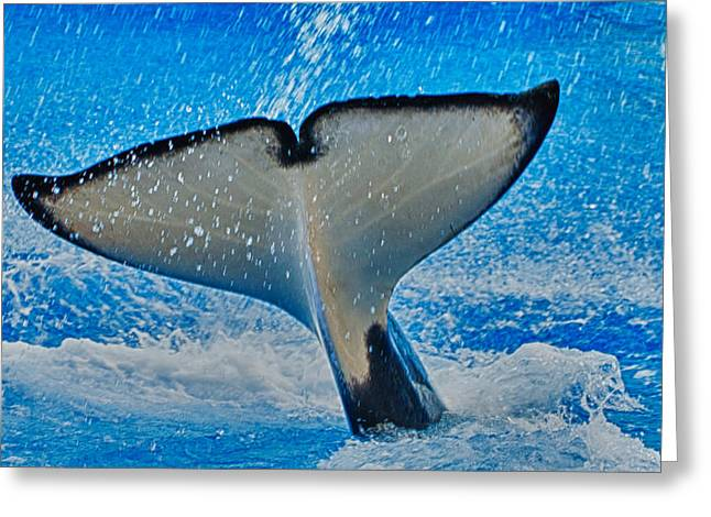 Killer Whale Greeting Cards - Whale Of A Tail Greeting Card by Linda Pulvermacher