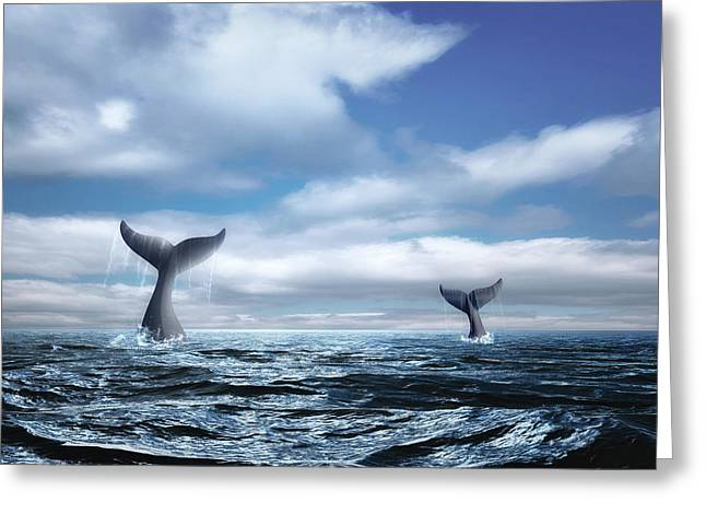 Whale Of A Tail Greeting Card by Tom Mc Nemar