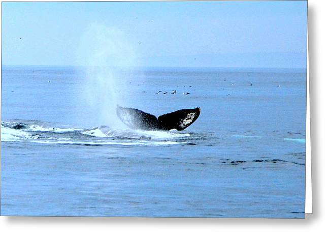 Ocean Mammals Greeting Cards - Whale Watch Moss Landing Series 25 Greeting Card by Antonia Citrino