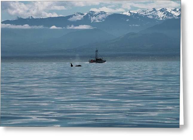 Whale Watching In The Strait Of Juan De Fuca Greeting Card by Dan Sproul