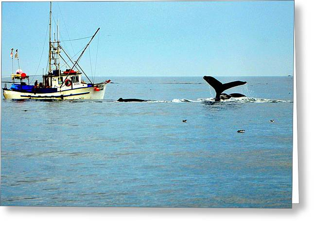 Whale Watching Moss Landing Series 26 Greeting Card by Antonia Citrino