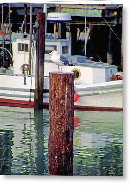 California Tourist Spots Digital Greeting Cards - Wharf Gull Greeting Card by Steve Ohlsen