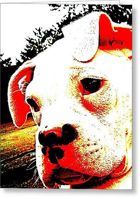 Boxer Puppy Digital Greeting Cards - What a Face Greeting Card by Beth Akerman