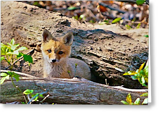 Mammal Mixed Media Greeting Cards - What A Fox Greeting Card by Robert Pearson