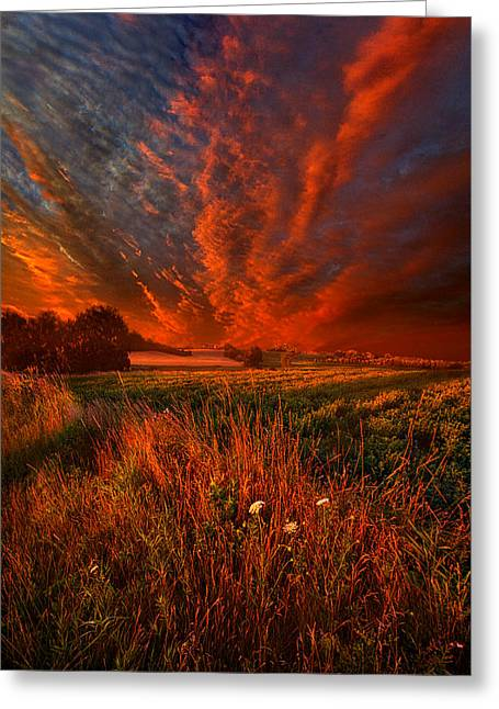Green Leafs Greeting Cards - What About Now Greeting Card by Phil Koch