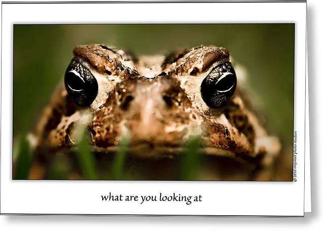 Onyonet Photo Studios Greeting Cards - What Are You Looking At Greeting Card by  Onyonet  Photo Studios