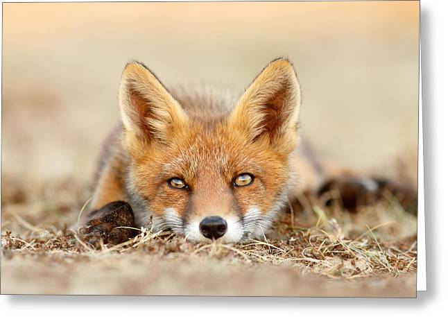 What Does The Fox Think? Greeting Card by Roeselien Raimond