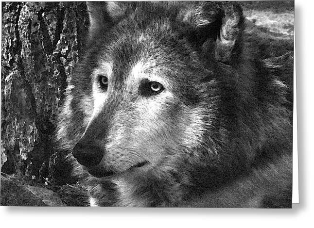 What Is A Wolf Thinking Greeting Card by Karol Livote