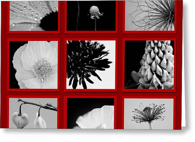 What Is Black And White And Red All Over  Greeting Card by Lisa Knechtel