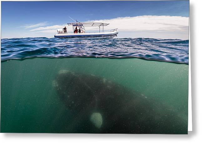 Marine Life Greeting Cards - What Lies Beneath Greeting Card by Justin Hofman