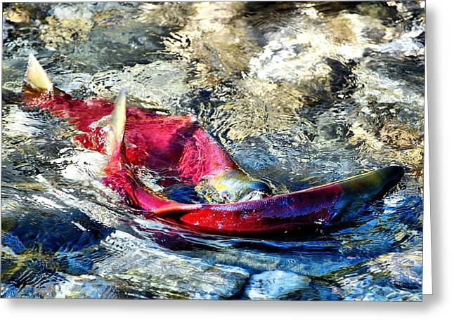 West Fork Digital Greeting Cards - Whats for Lunch Greeting Card by Don Mann