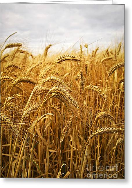 Wheat Greeting Cards - Wheat Greeting Card by Elena Elisseeva
