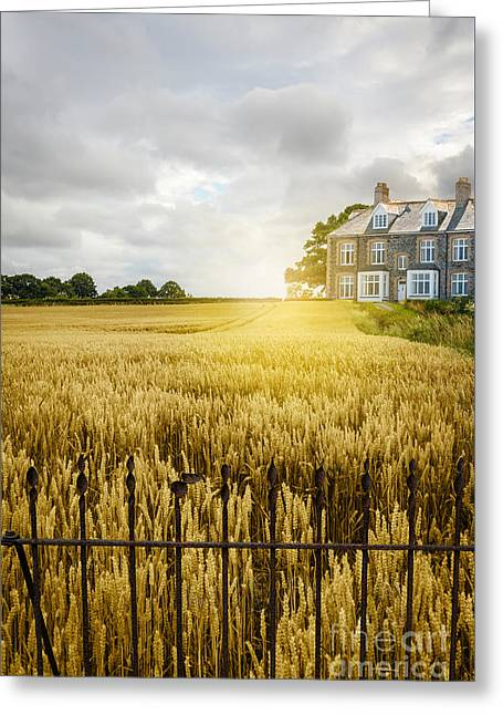 Quaint Greeting Cards - Wheat Field Greeting Card by Amanda And Christopher Elwell