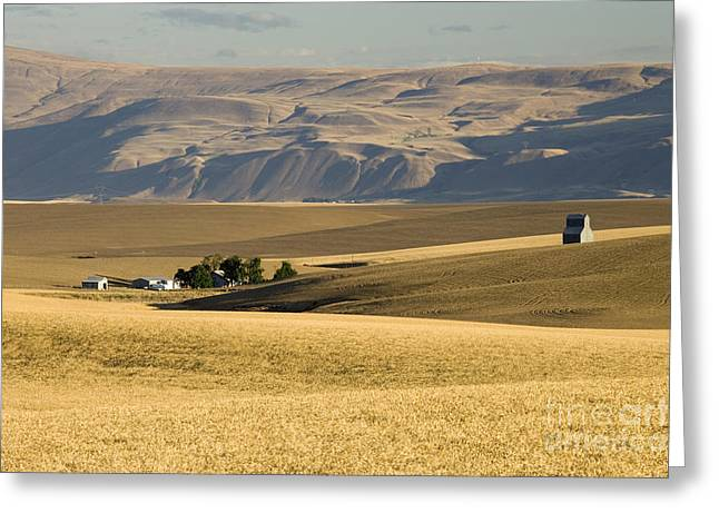 Wheat Fields, Oregon Greeting Card by Inga Spence