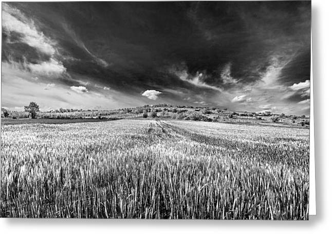 Black And White Nature Landscapes Greeting Cards - Wheatfiield Greeting Card by Ivan Vukelic
