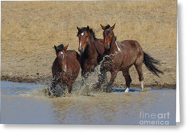 The Horse Greeting Cards - When a Horse Sees a Waterhole Greeting Card by Rod  Giffels