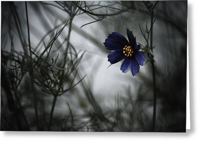 Macro Greeting Cards - When Cosmos Will Be Blue Greeting Card by Fabien Bravin