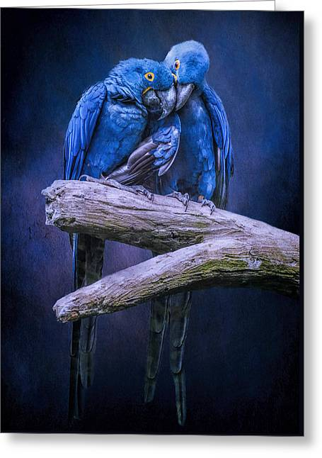 Pairs Greeting Cards - When Im Feeling Blue Greeting Card by Brian Tarr