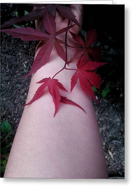When Life Gives You Japanese Maple Leaves... Greeting Card by Brynn Ditsche