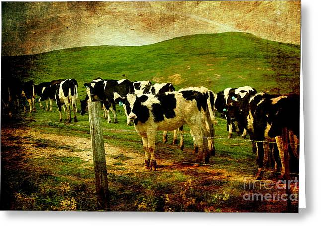 When The Cows Come Home . Photoart Greeting Card by Wingsdomain Art and Photography