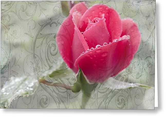 Floral Photographs Mixed Media Greeting Cards - When The Dew is on the Rose Greeting Card by Betty LaRue
