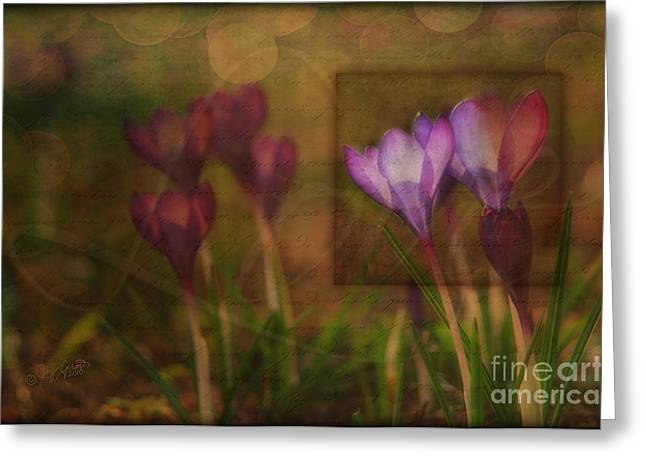 When The Light Paints The Flowers Greeting Card by Joy Gerow
