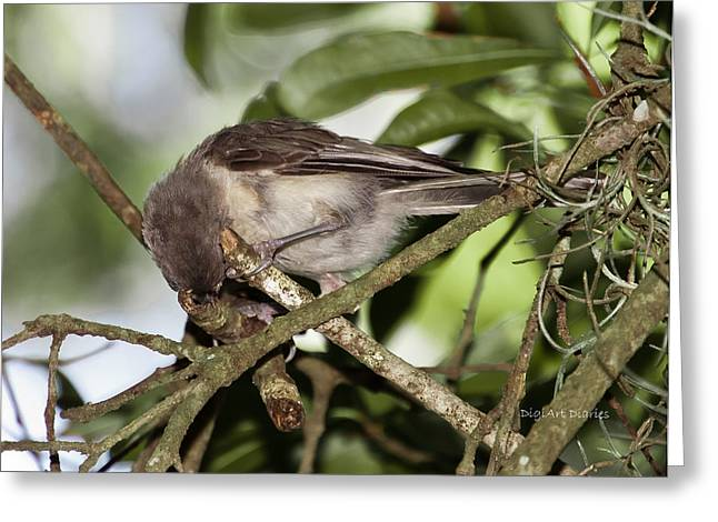 Tufted Titmouse Greeting Cards - Where Did It Go Greeting Card by DigiArt Diaries by Vicky B Fuller