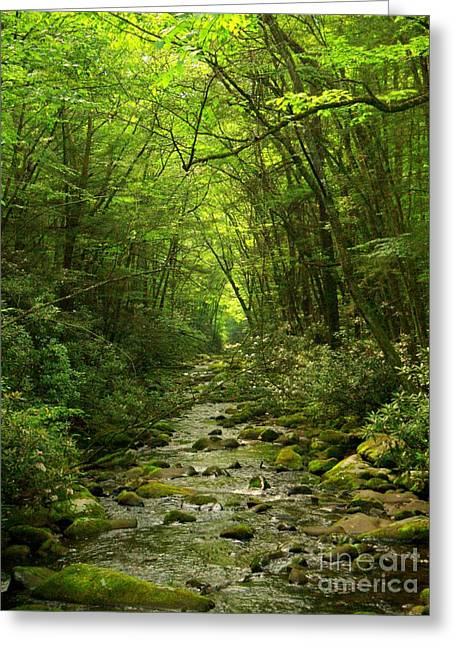 Where It Leads Greeting Card by M Glisson