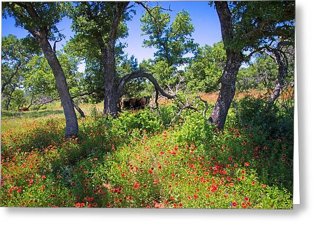 Firewall Greeting Cards - Where the Cattle Roam Greeting Card by Lynn Bauer