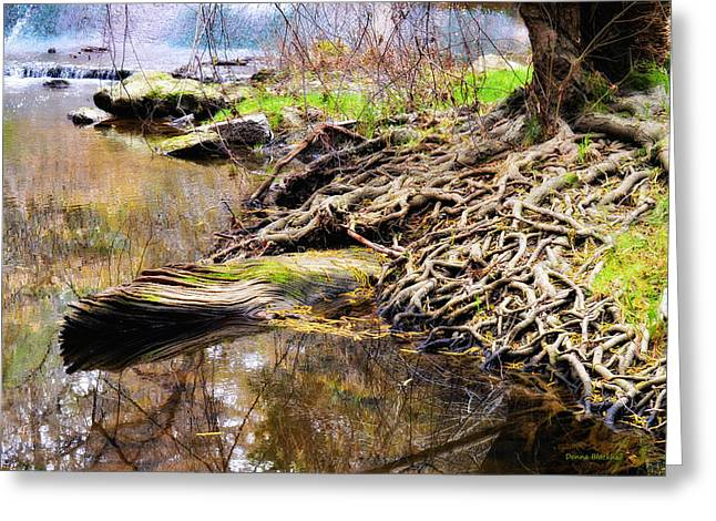 Tree Roots Photographs Greeting Cards - Where The Fairies Live Greeting Card by Donna Blackhall