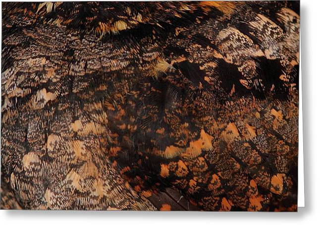 Nightjars Greeting Cards - Whip-poor-will Feathers Greeting Card by Bruce J Robinson