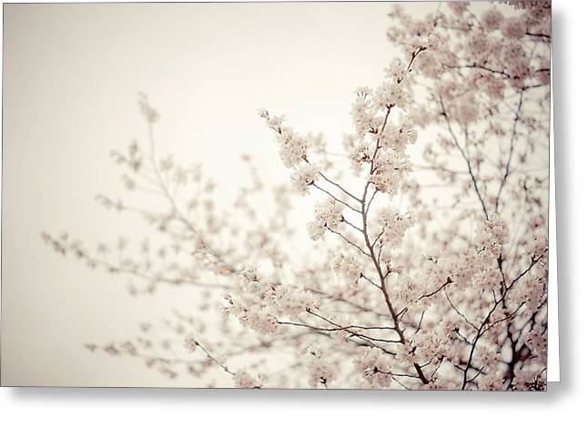 Whisper - Spring Blossoms - Central Park Greeting Card by Vivienne Gucwa