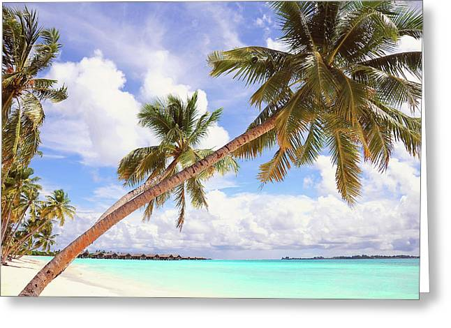 Whispering Palms. Maldives Greeting Card by Jenny Rainbow