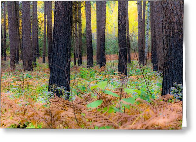Whispering Woods Greeting Card by Mary Amerman