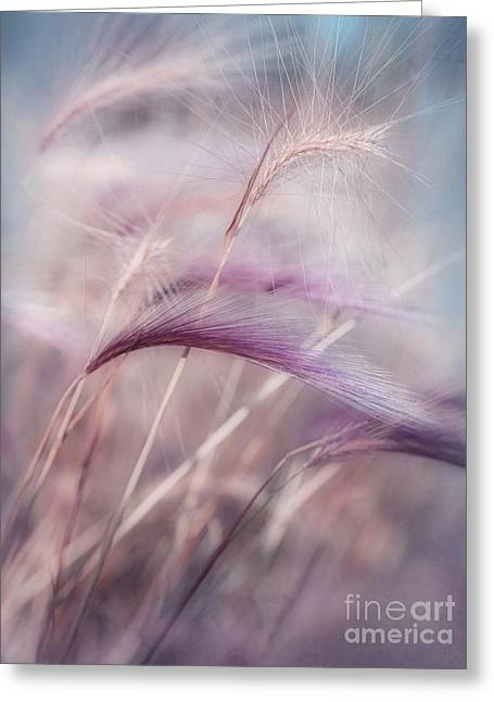 Meadow Photographs Greeting Cards - Whispers In The Wind Greeting Card by Priska Wettstein