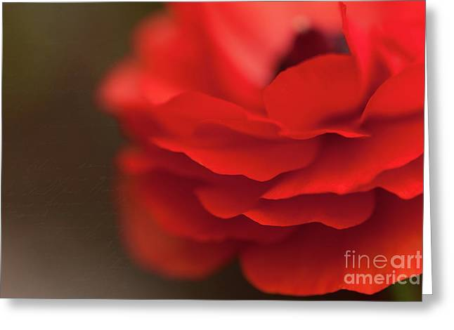 Whispers of Love Greeting Card by Reflective Moment Photography And Digital Art Images