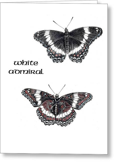 Betsy Bell Greeting Cards - White Admiral Butterfly Greeting Card by Betsy Gray