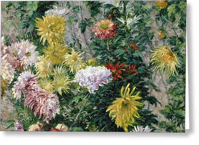 White and Yellow Chrysanthemums Greeting Card by Gustave Caillebotte