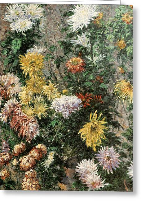 Gennevilliers Greeting Cards - White and Yellow Chrysanthemums in the Garden at Petit Gennevilliers Greeting Card by Gustave Caillebotte