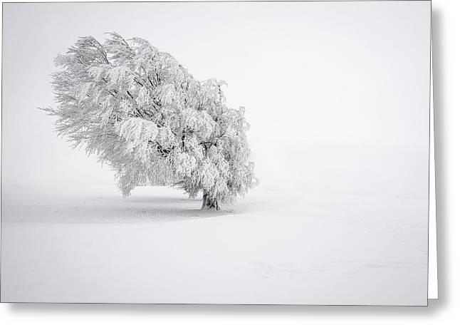Cold Greeting Cards - White Greeting Card by Andreas Wonisch