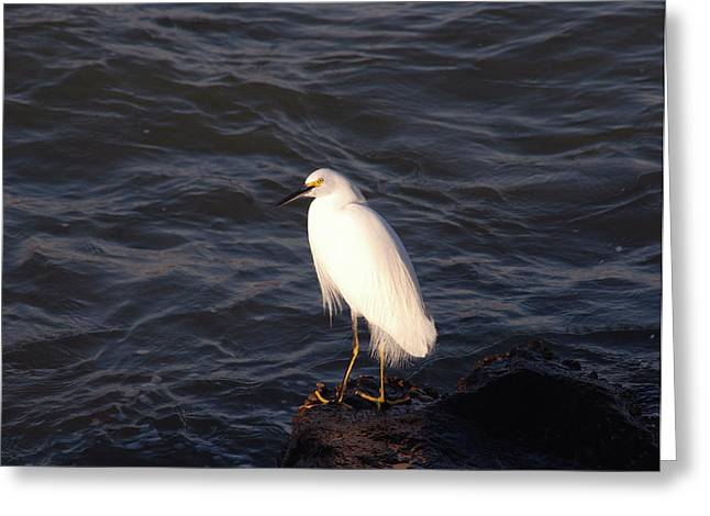 Sitting On Rock Greeting Cards - White as snow Greeting Card by Susanne Van Hulst