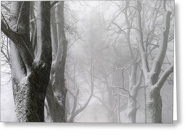 Avenues Greeting Cards - White Avenue Greeting Card by Franz Bogner