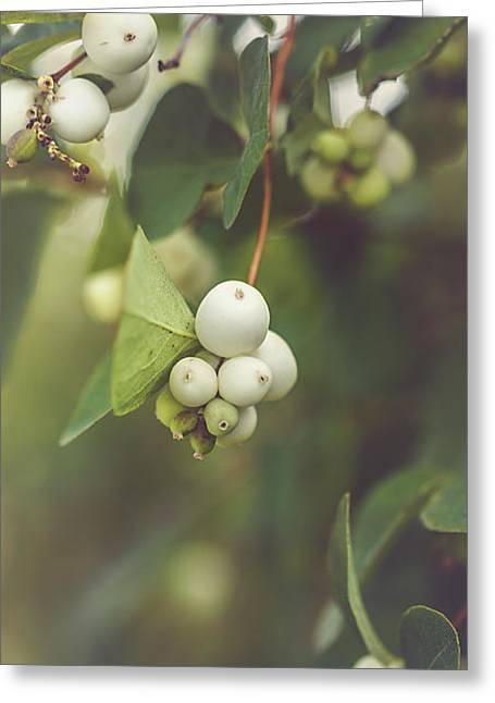 White Berries Greeting Card by Cindy Grundsten